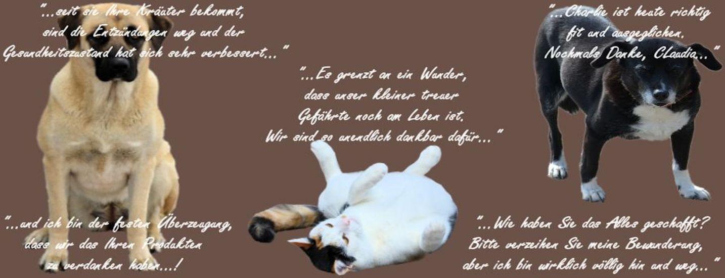 Erfahrungen-Hund-Katz-2