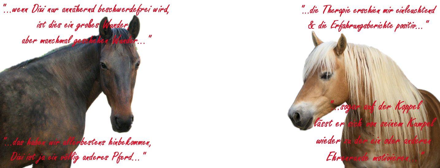 Haaranalysen für Tiere