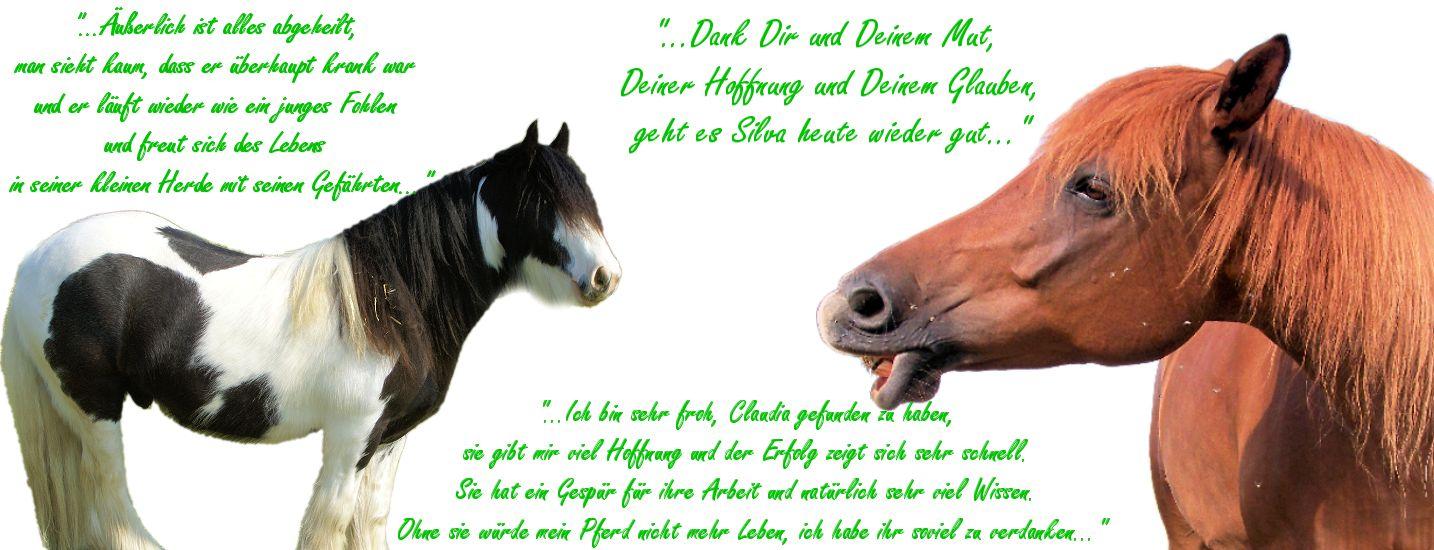 Haaranalysen für Pferde, Hunde, Katzen
